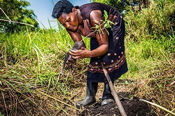 Vrouw plant boom in Oeganda